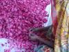 Bild von Rosenblüten Verarbeitung
